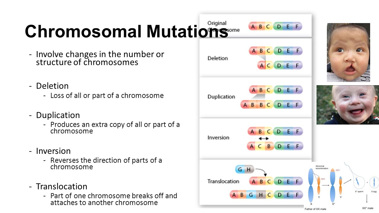 Chromosomal Mutations -Involve changes in the number or structure of chromosomes -Deletion -Loss of all or part of a chromosome -Duplication -Produces