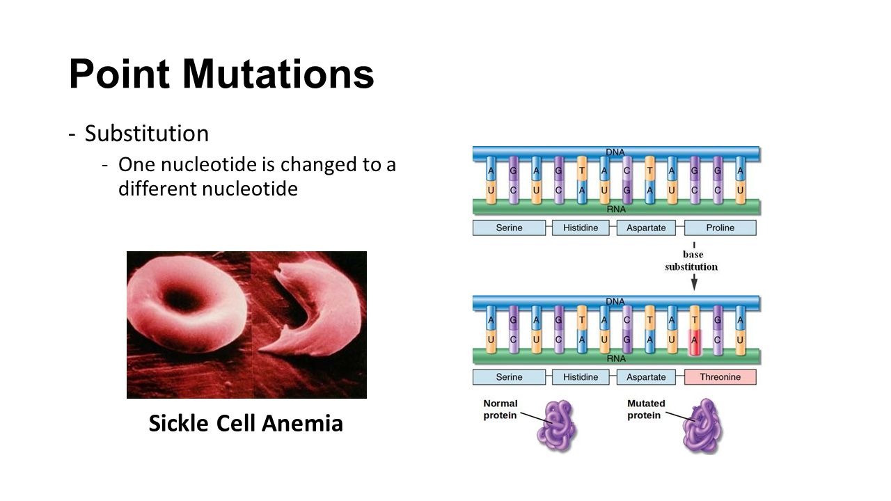 Point Mutations -Substitution -One nucleotide is changed to a different nucleotide Sickle Cell Anemia