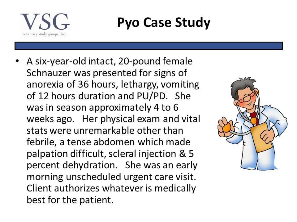 Pyo Case Study A six-year-old intact, 20-pound female Schnauzer was presented for signs of anorexia of 36 hours, lethargy, vomiting of 12 hours durati
