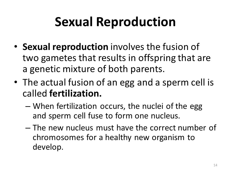 Sexual Reproduction Sexual reproduction involves the fusion of two gametes that results in offspring that are a genetic mixture of both parents.