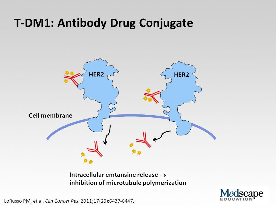 Cell membrane T-DM1: Antibody Drug Conjugate Intracellular emtansine release  inhibition of microtubule polymerization LoRusso PM, et al. Clin Cancer