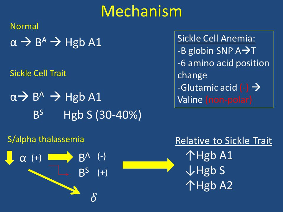 Mechanism α  B A  Hgb A1 B S Hgb S (30-40%) Normal Sickle Cell Trait S/alpha thalassemia Sickle Cell Anemia: -B globin SNP A  T -6 amino acid position change -Glutamic acid (-)  Valine (non-polar) αBABSBABS (+) (-) (+) ↑Hgb A1 ↓Hgb S ↑Hgb A2 Relative to Sickle Trait