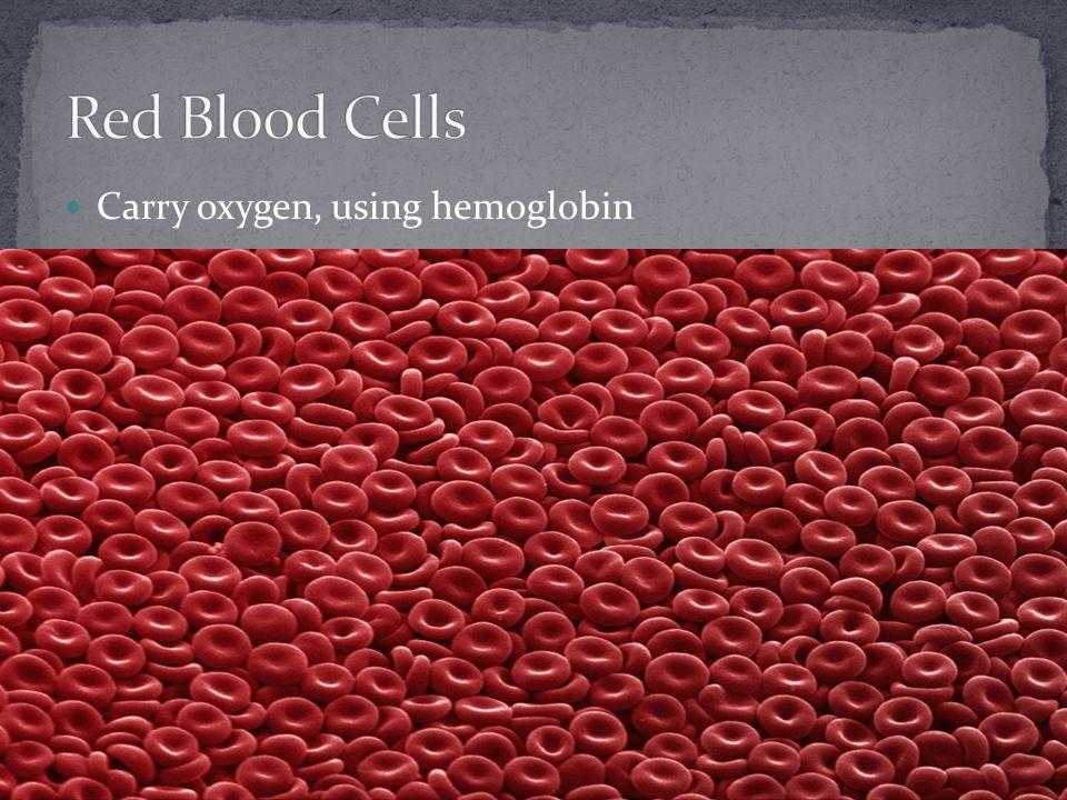 Carry oxygen, using hemoglobin