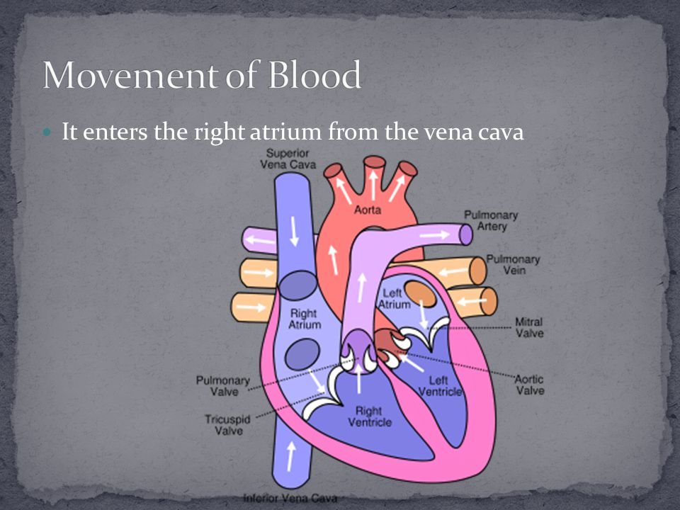 It goes through a valve to the right ventricle The valve prevents blood from flowing back