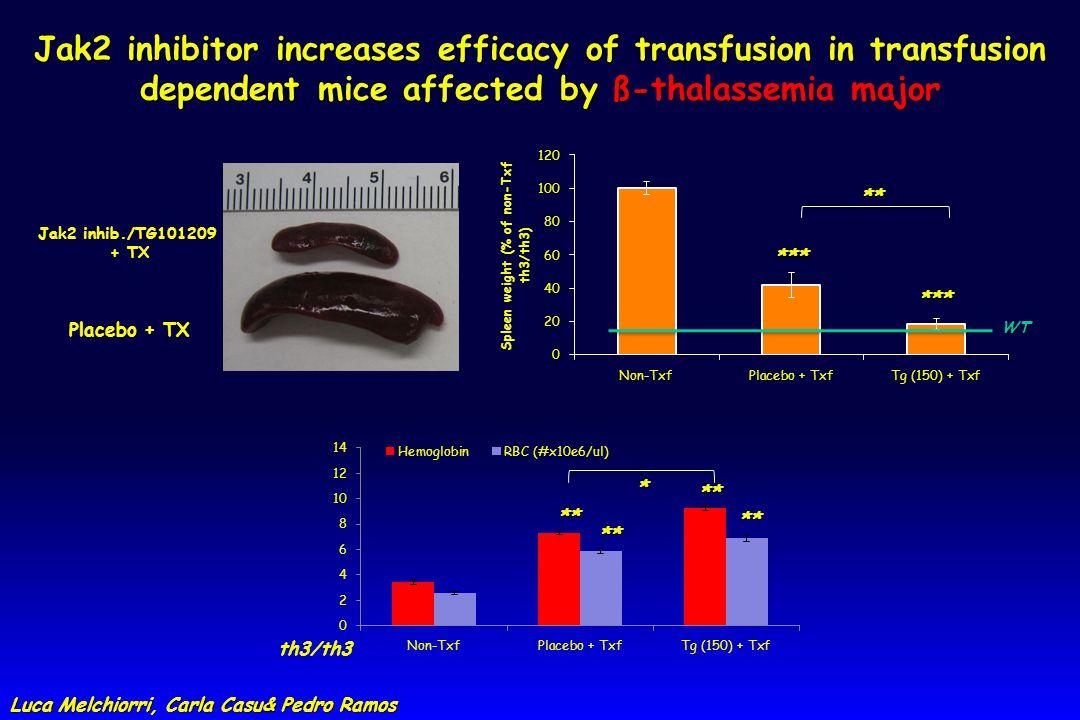 Luca Melchiorri, Carla Casu& Pedro Ramos Luca Melchiorri, Carla Casu& Pedro Ramos Jak2 inhibitor increases efficacy of transfusion in transfusion dependent mice affected by ß-thalassemia major ** ** ** ** * th3/th3 Placebo + TX Jak2 inhib./TG101209 + TX *** *** ** WT