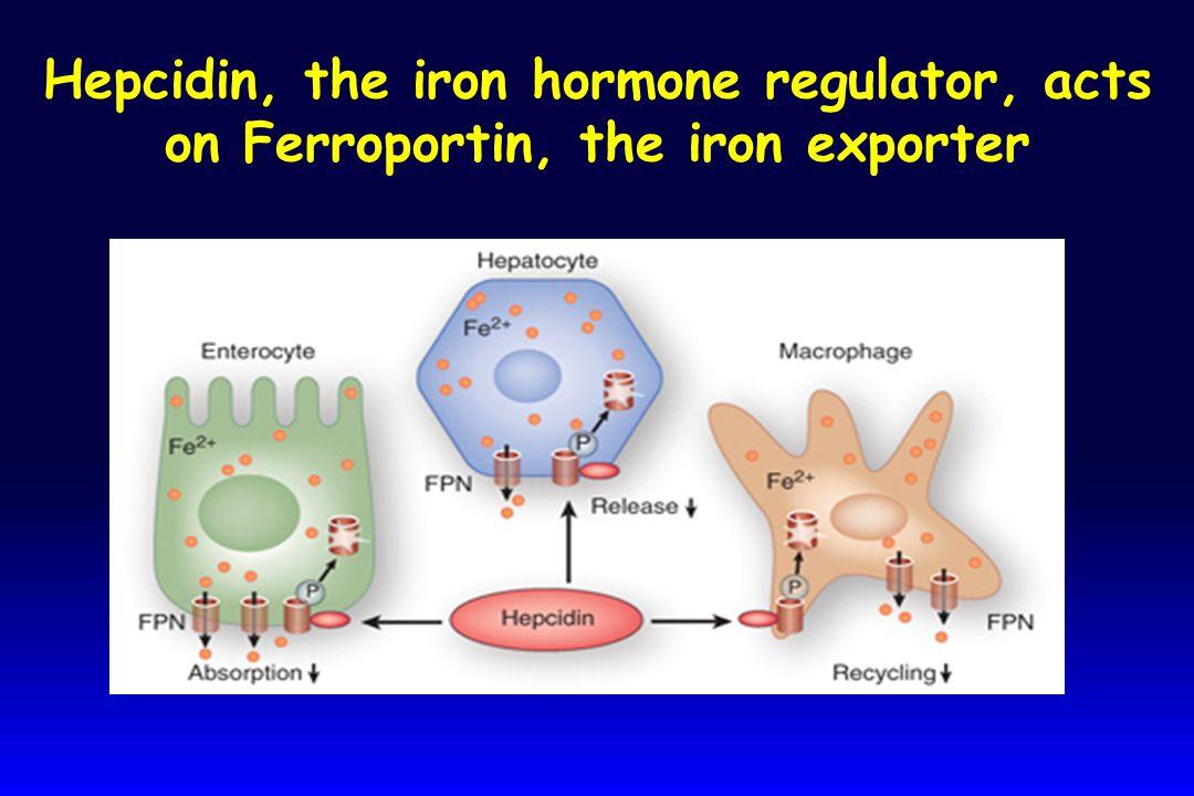 Hepcidin, the iron hormone regulator, acts on Ferroportin, the iron exporter
