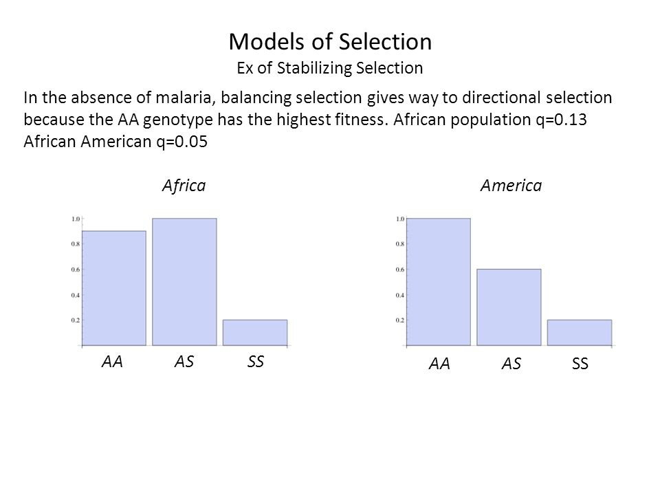 In the absence of malaria, balancing selection gives way to directional selection because the AA genotype has the highest fitness. African population