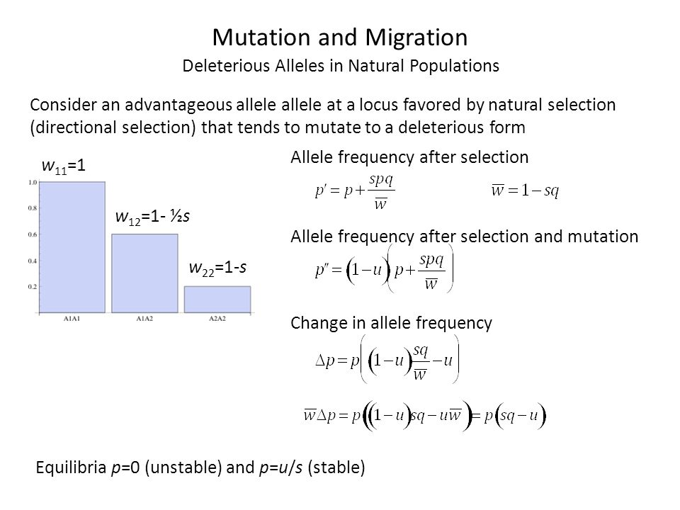 Mutation and Migration Deleterious Alleles in Natural Populations Consider an advantageous allele allele at a locus favored by natural selection (dire