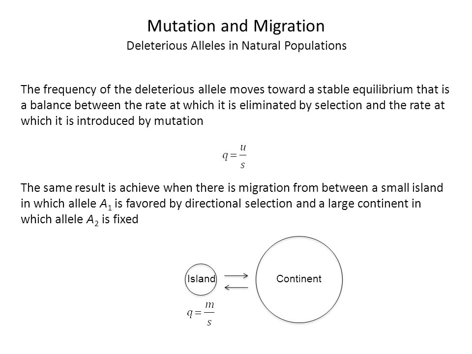 Mutation and Migration Deleterious Alleles in Natural Populations The frequency of the deleterious allele moves toward a stable equilibrium that is a