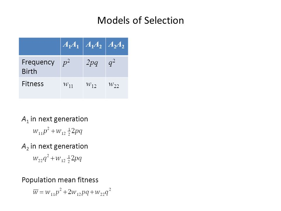 Models of Selection A1A1A1A1 A1A2A1A2 A2A2A2A2 Frequency Birth p2p2 2pqq2q2 Fitness w 11 w 12 w 22 Population mean fitness A 1 in next generation A 2