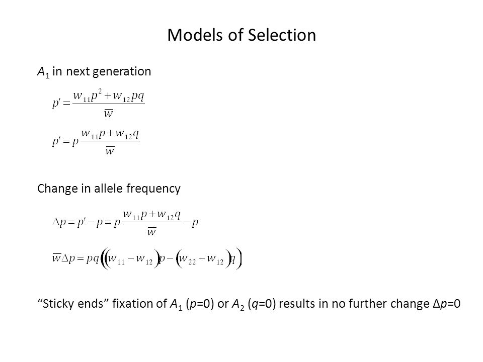 Models of Selection Stabilizing Selection Change in allele frequency Parametrization w 11 =1-s w 12 =1 w 22 =1-s Equilibria p=1, q=1 (unstable) and p=½ (stable) A 1 always increases when its frequency is less than ½ but decreases when its frequency is more than ½