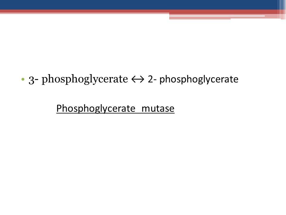3- phosphoglycerate ↔ 2- phosphoglycerate Phosphoglycerate mutase