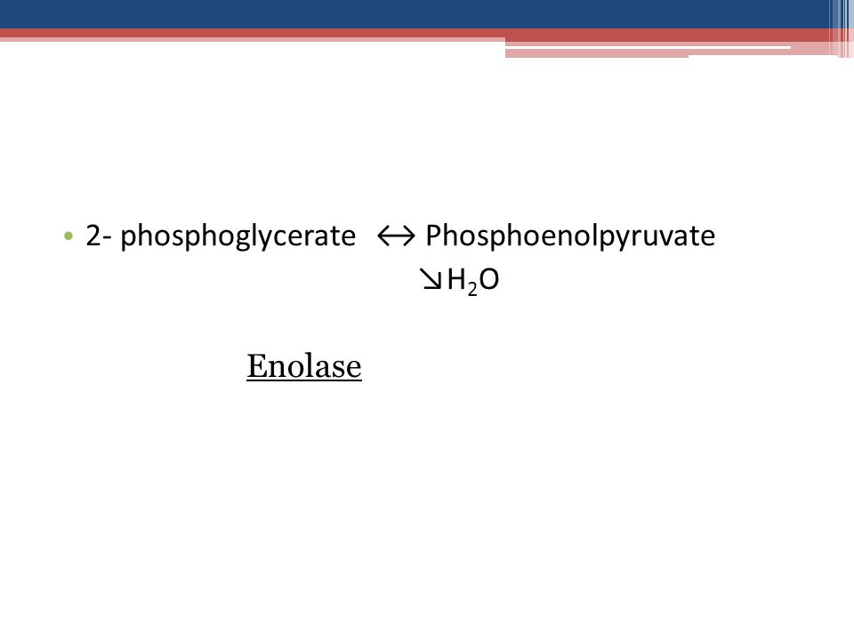 2- phosphoglycerate ↔ Phosphoenolpyruvate ↘H 2 O Enolase