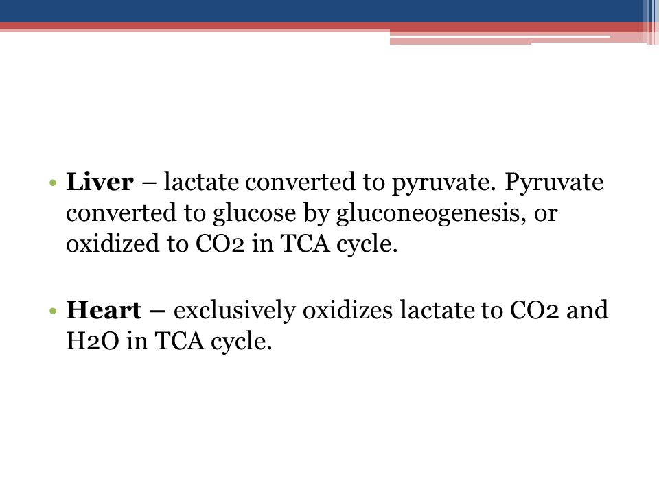 Liver – lactate converted to pyruvate.