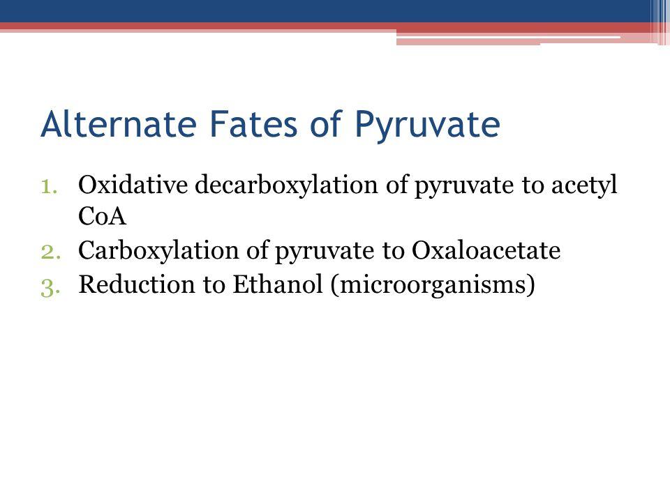 Alternate Fates of Pyruvate 1.Oxidative decarboxylation of pyruvate to acetyl CoA 2.Carboxylation of pyruvate to Oxaloacetate 3.Reduction to Ethanol (microorganisms)
