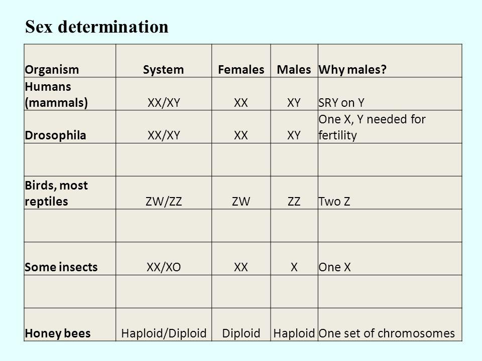 Sex determination OrganismSystemFemalesMalesWhy males.