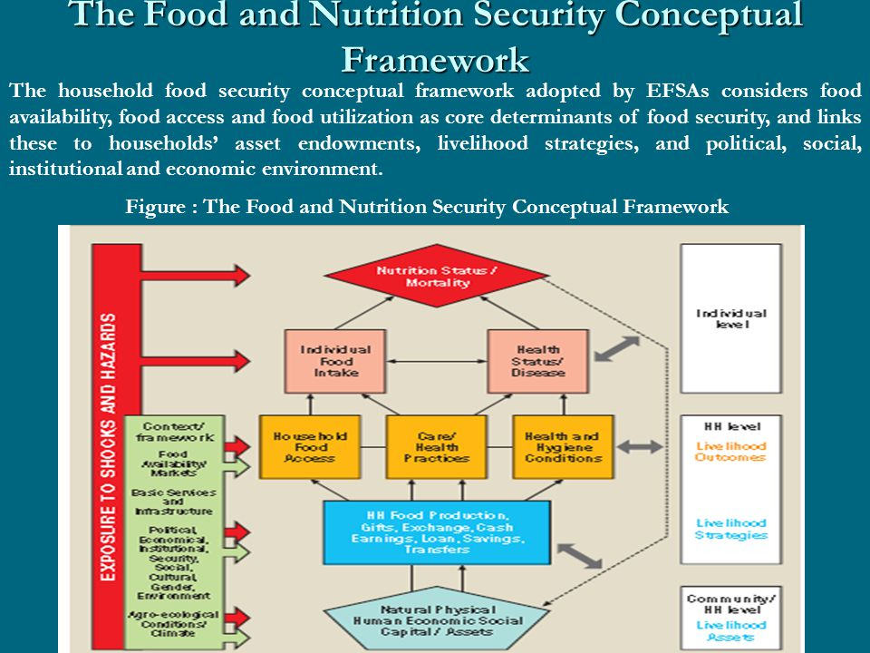 The Food and Nutrition Security Conceptual Framework The household food security conceptual framework adopted by EFSAs considers food availability, food access and food utilization as core determinants of food security, and links these to households' asset endowments, livelihood strategies, and political, social, institutional and economic environment.