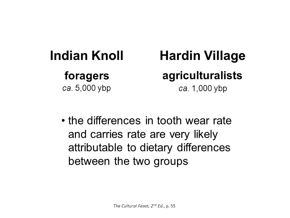 Hardin Village the differences in tooth wear rate and carries rate are very likely attributable to dietary differences between the two groups foragers agriculturalists Indian Knoll ca.