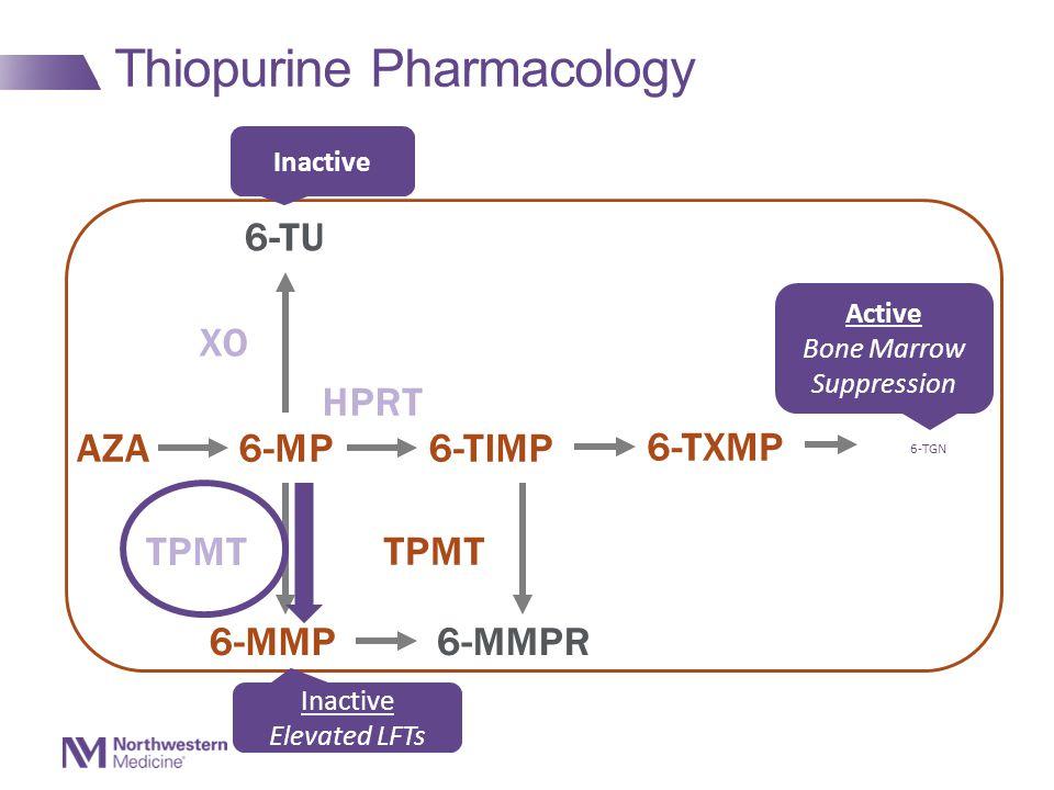 Thiopurine Pharmacology AZA6-MP6-TIMP 6-TXMP 6-TGN 6-TU 6-MMP6-MMPR XO TPMT HPRT TPMT Inactive Active Bone Marrow Suppression Inactive Elevated LFTs 6-TGN