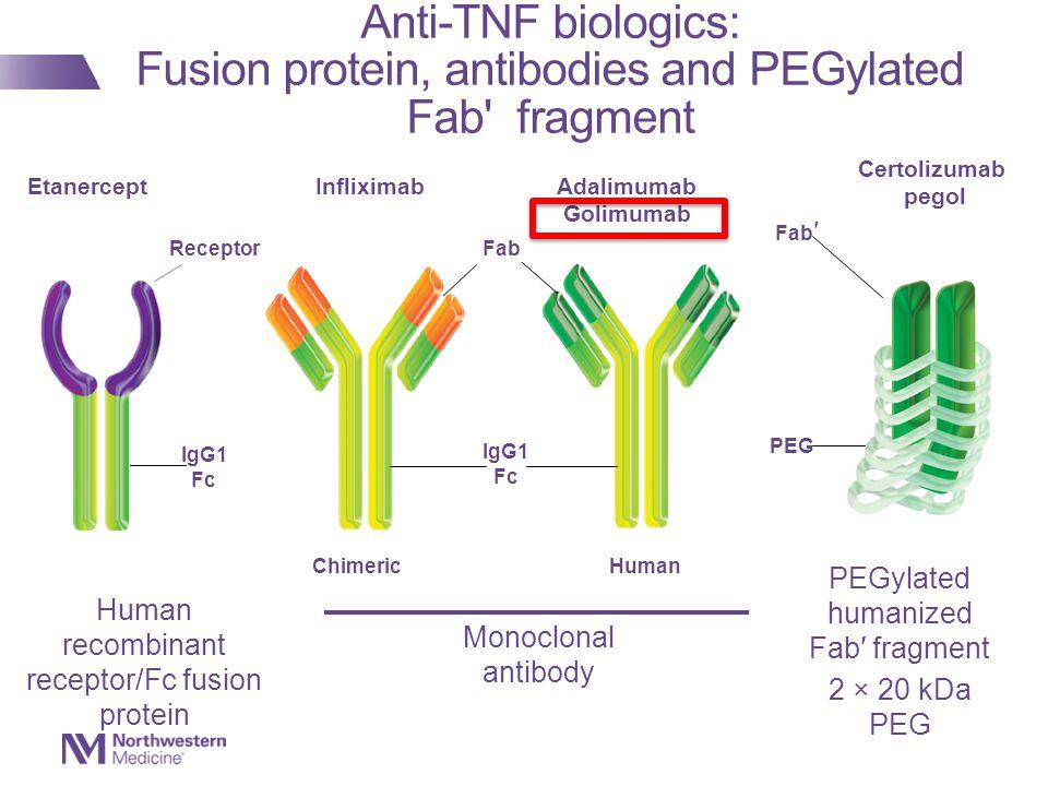 Infliximab Adalimumab Golimumab IgG1 Fc Fab Etanercept IgG1 Fc Receptor Monoclonal antibody Human Human recombinant receptor/Fc fusion protein Chimeric Fab ′ Certolizumab pegol PEG PEGylated humanized Fab′ fragment 2 × 20 kDa PEG Anti-TNF biologics: Fusion protein, antibodies and PEGylated Fab fragment