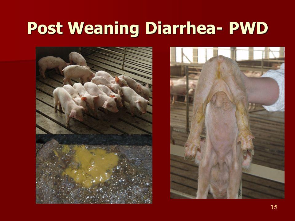 15 Post Weaning Diarrhea- PWD