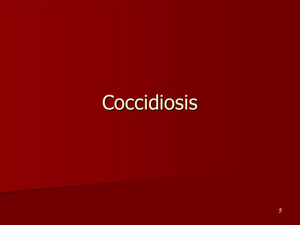 5 Coccidiosis