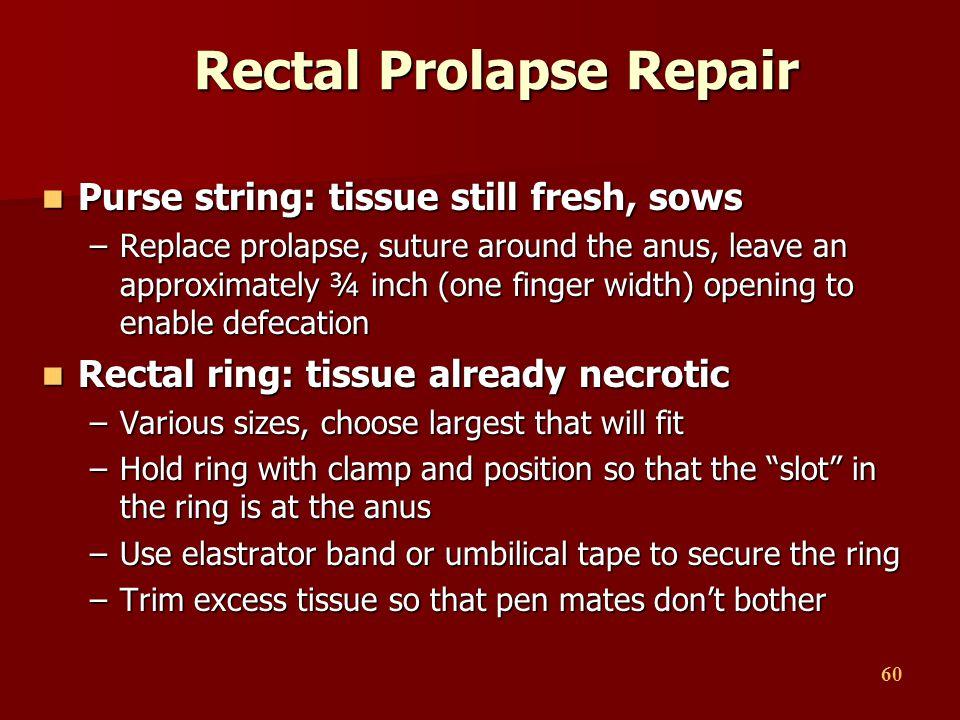 60 Rectal Prolapse Repair Purse string: tissue still fresh, sows Purse string: tissue still fresh, sows –Replace prolapse, suture around the anus, lea