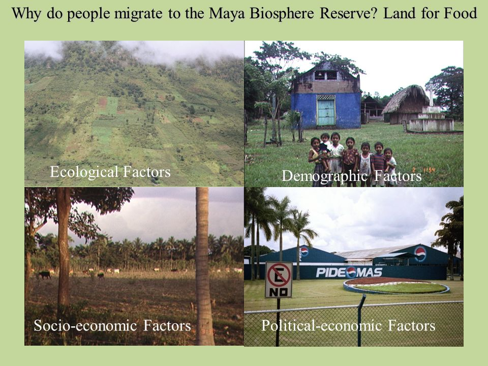 Why do people migrate to the Maya Biosphere Reserve.