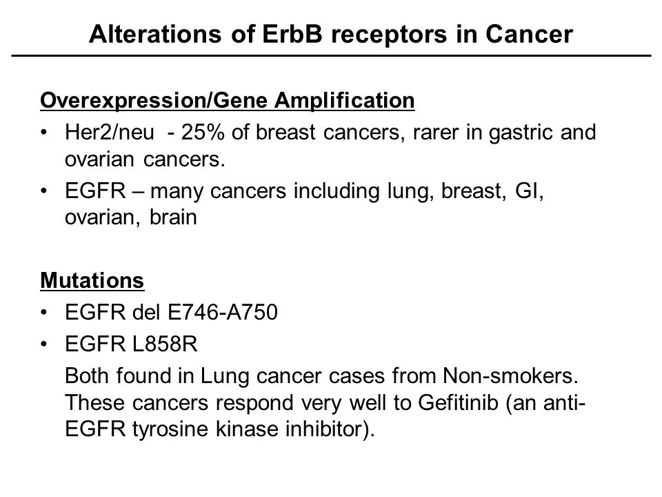 Alterations of ErbB receptors in Cancer Overexpression/Gene Amplification Her2/neu - 25% of breast cancers, rarer in gastric and ovarian cancers.