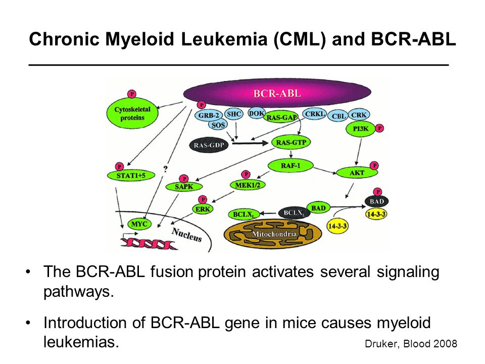 Chronic Myeloid Leukemia (CML) and BCR-ABL The BCR-ABL fusion protein activates several signaling pathways.