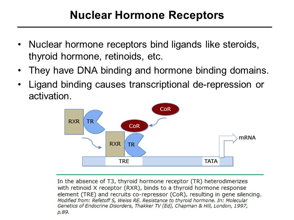 Nuclear Hormone Receptors Nuclear hormone receptors bind ligands like steroids, thyroid hormone, retinoids, etc.