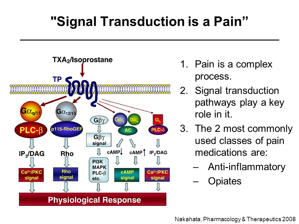 Signal Transduction is a Pain 1.Pain is a complex process.