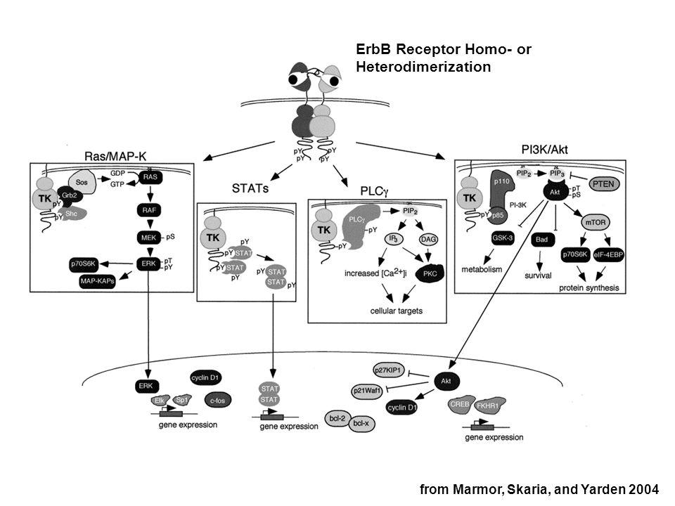 Anti-Inflammatory Medicines inhibit Thromboxane Synthesis Aspirin Ibuprofen Cyclooxygenase (COX) Inhibitors TXA 2 Nakahata, Pharmacology & Therapeutics 2008