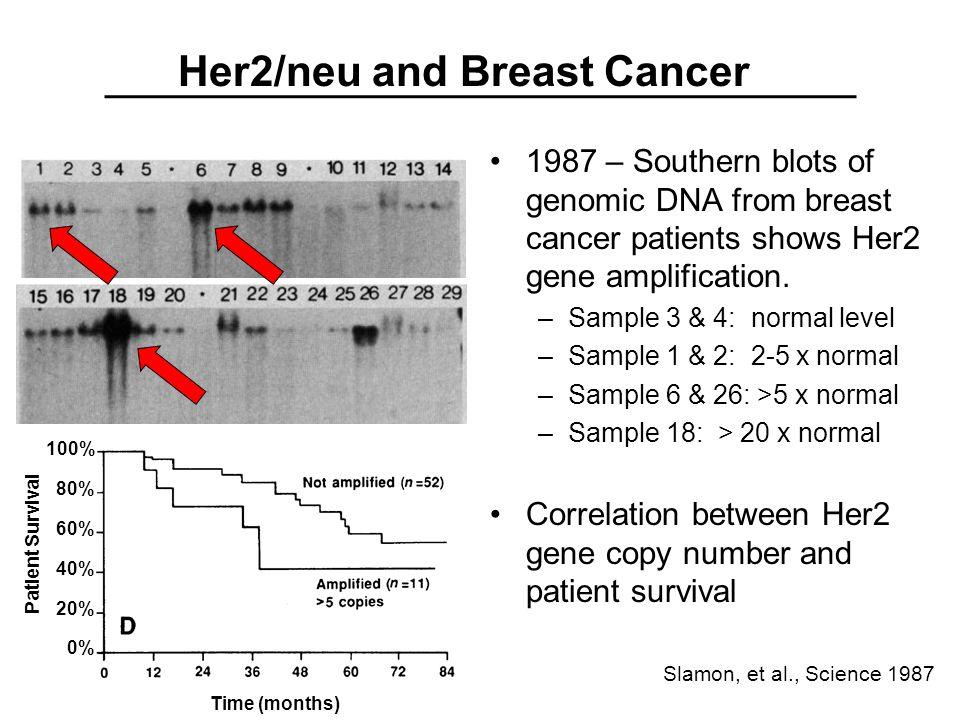 Targeting MAPK pathway in Cancer (C) Ras -GTP Raf (MAPKKK) MEK (MAPKK) Erk 1 & 2 (MAPK) Figure 6.12 The Biology of Cancer (© Garland Science 2007) T T Raf inhibitors MEK inhibitors