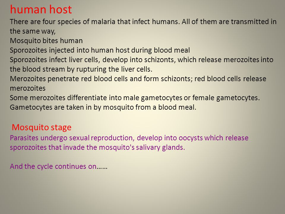 Sporogonous Cycle : Mosquito Stages Gametocytes P.