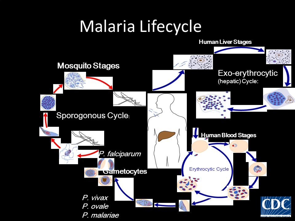 Epidemiology Malaria is the most important cause of fever and morbidity in the tropical world.