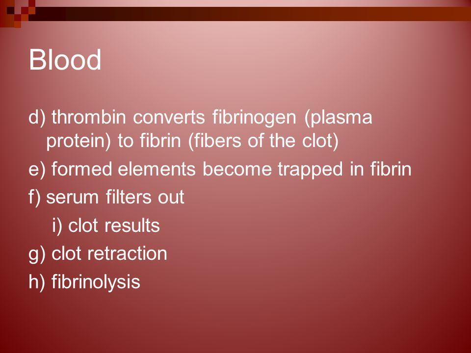 Blood d) thrombin converts fibrinogen (plasma protein) to fibrin (fibers of the clot) e) formed elements become trapped in fibrin f) serum filters out i) clot results g) clot retraction h) fibrinolysis
