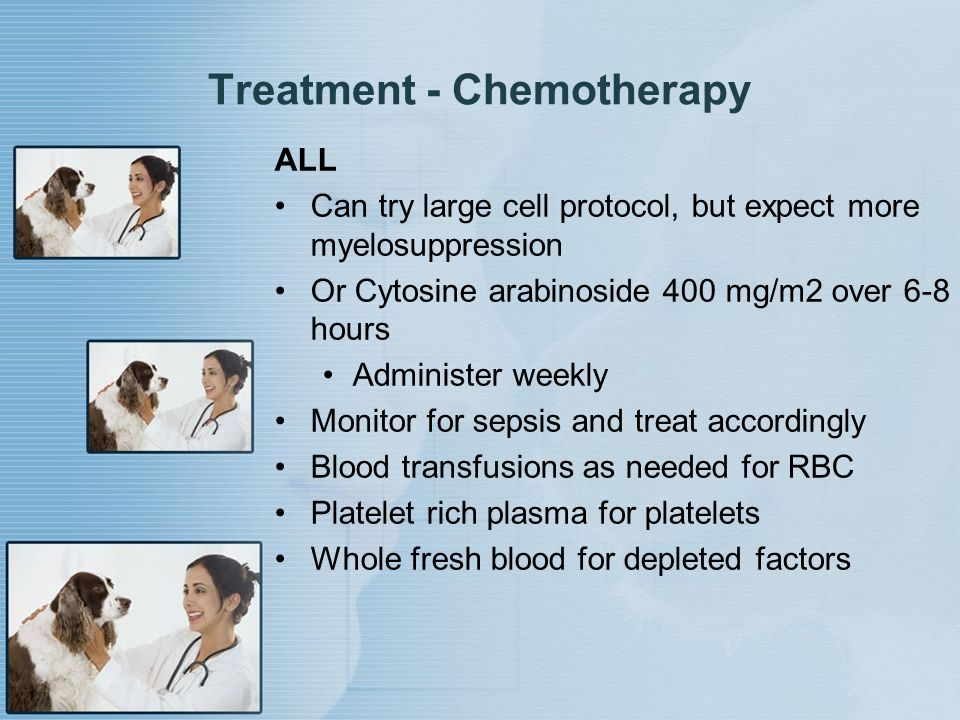 Treatment - Chemotherapy ALL Can try large cell protocol, but expect more myelosuppression Or Cytosine arabinoside 400 mg/m2 over 6-8 hours Administer