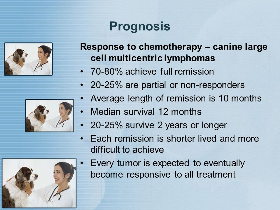 Prognosis Response to chemotherapy – canine large cell multicentric lymphomas 70-80% achieve full remission 20-25% are partial or non-responders Avera