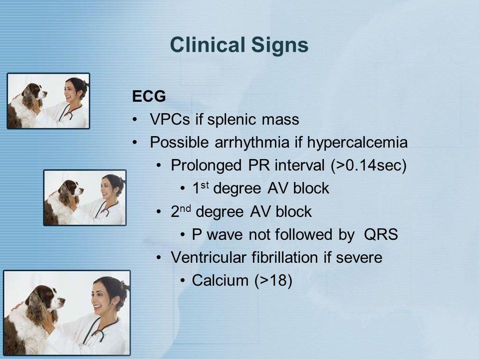 Clinical Signs ECG VPCs if splenic mass Possible arrhythmia if hypercalcemia Prolonged PR interval (>0.14sec) 1 st degree AV block 2 nd degree AV bloc