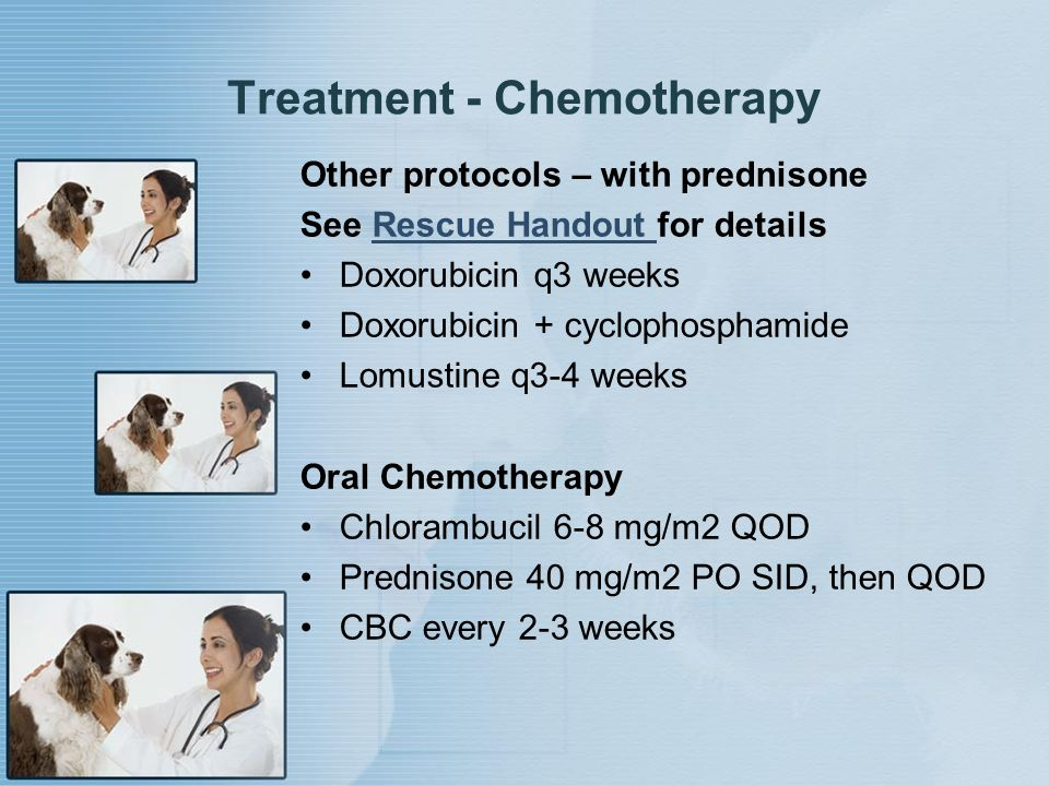 Treatment - Chemotherapy Other protocols – with prednisone See Rescue Handout for detailsRescue Handout Doxorubicin q3 weeks Doxorubicin + cyclophosph