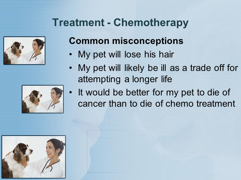 Treatment - Chemotherapy Common misconceptions My pet will lose his hair My pet will likely be ill as a trade off for attempting a longer life It woul