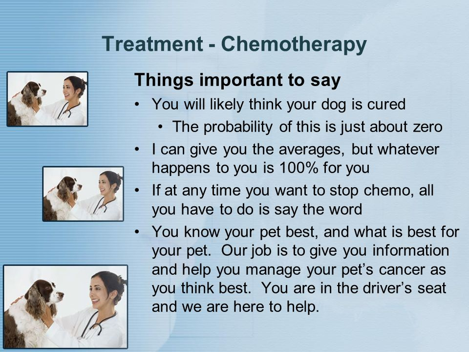 Treatment - Chemotherapy Things important to say You will likely think your dog is cured The probability of this is just about zero I can give you the