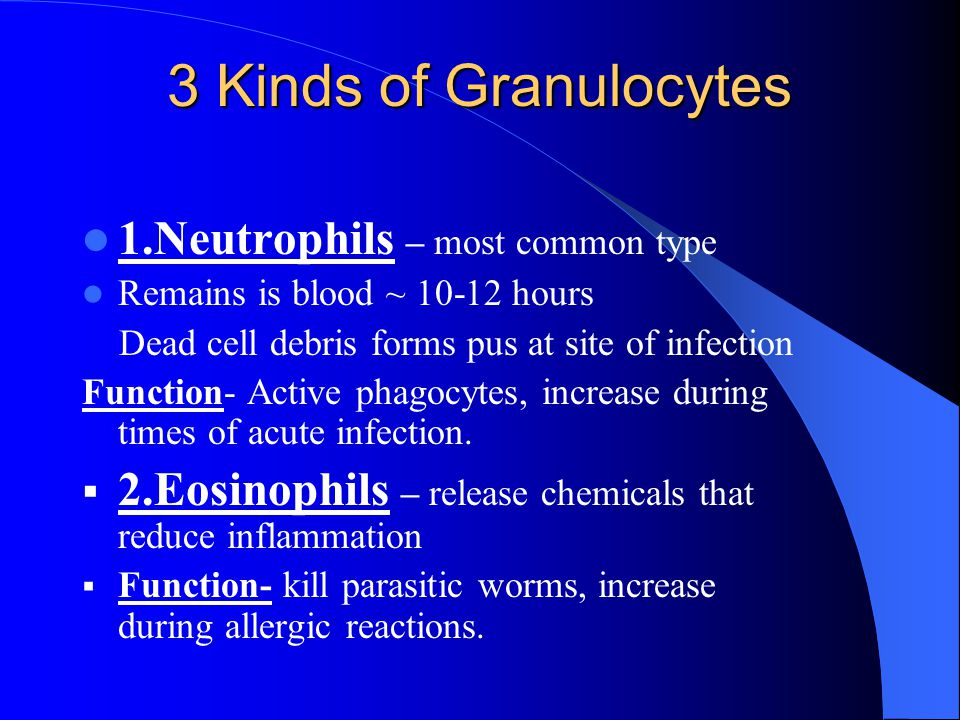 Granulocytes Cont'd 3.Basophils – help regulate inflammatory response Release histamine = promotes inflammation Histamines are vasodilators, which increase blood flow to area.