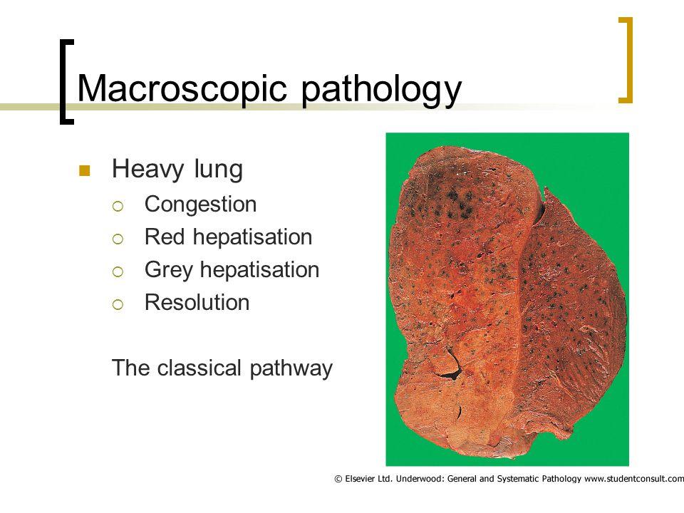Macroscopic pathology Heavy lung  Congestion  Red hepatisation  Grey hepatisation  Resolution The classical pathway
