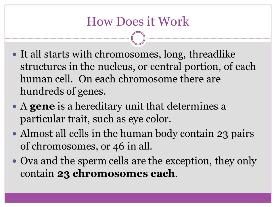 How Does it Work It all starts with chromosomes, long, threadlike structures in the nucleus, or central portion, of each human cell. On each chromosom
