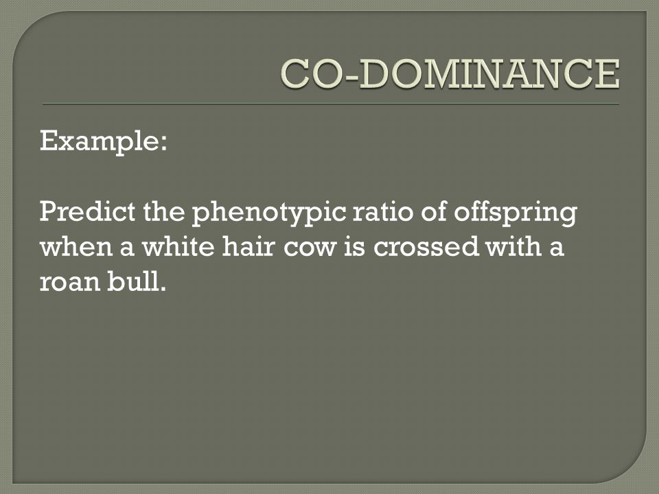 Example: Predict the phenotypic ratio of offspring when a white hair cow is crossed with a roan bull.
