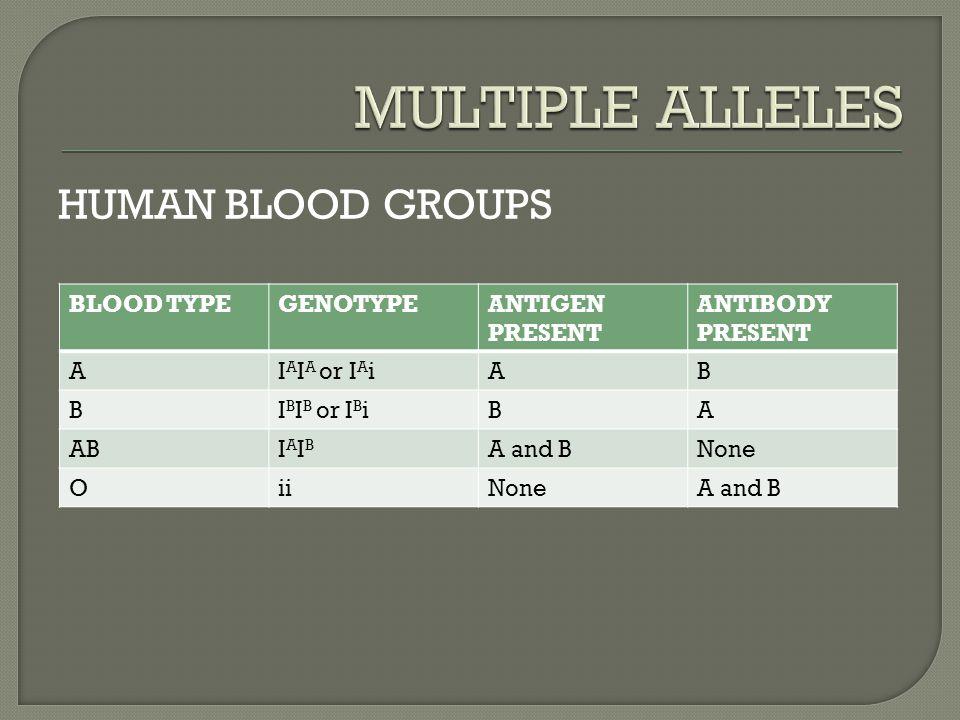 BLOOD TYPEGENOTYPEANTIGEN PRESENT ANTIBODY PRESENT AI A I A or I A iAB BI B I B or I B iBA ABIAIBIAIB A and BNone OiiNoneA and B