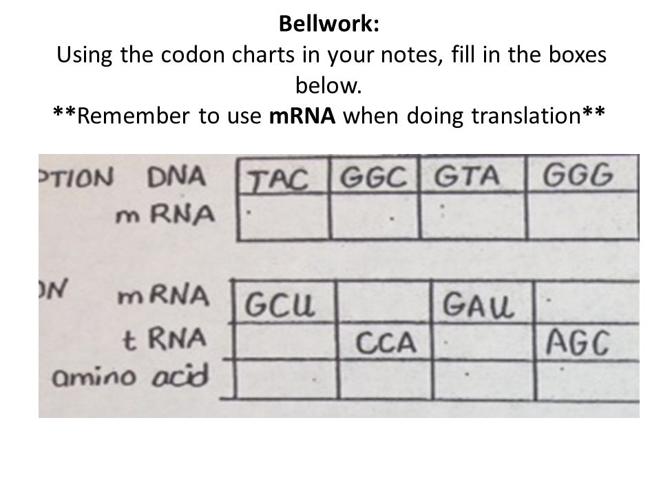 Bellwork: Using the codon charts in your notes, fill in the boxes below. **Remember to use mRNA when doing translation**