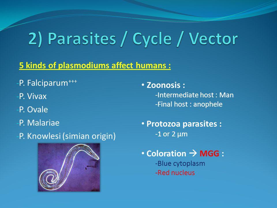 - P. Falciparum +++ - P. Vivax - P. Ovale - P. Malariae - P. Knowlesi (simian origin) 5 kinds of plasmodiums affect humans : Zoonosis : -Intermediate